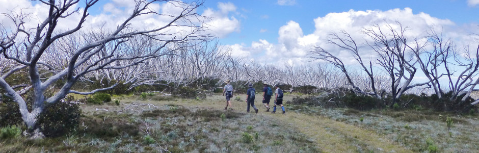 Track_from_Gables_End_to_Millers_Hut_-_Alpine_National_Park-940x300.jpg